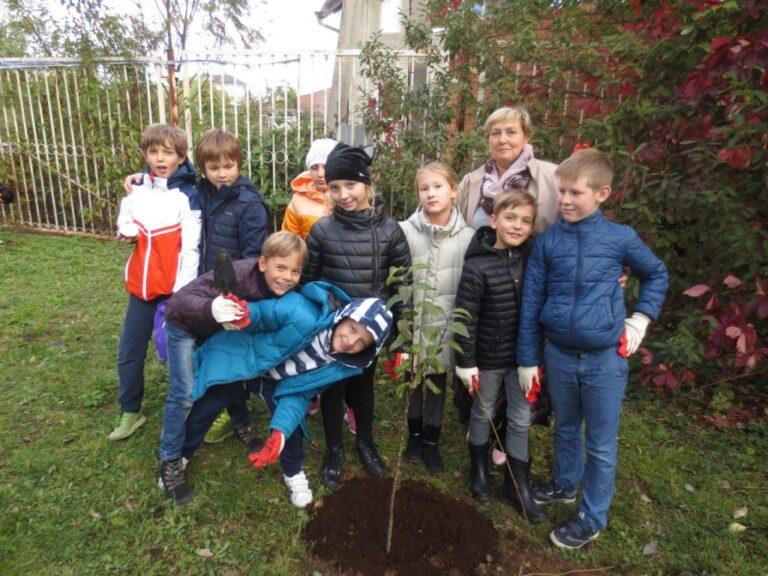 Посадка деревьев 2018